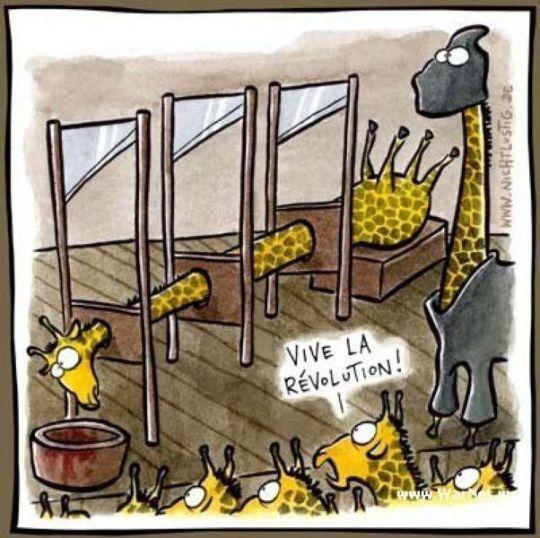 guillotine-for-giraffes